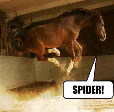 Afraid Of Spiders Meme - horse jump scared spider horse jumping pinterest