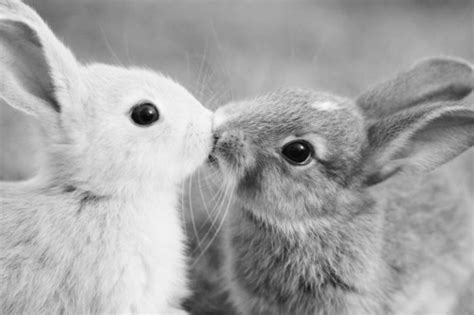 black and white rabbit wallpaper adorable black and white bunnies bunny cute