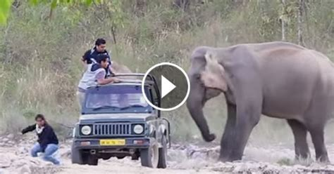 Black Bear Decorations Home by Elephant Attack