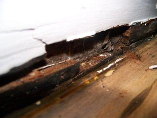 wood   Is this water damage, dry rot, or just old age