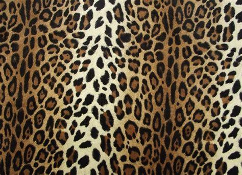 Print A Wallpaper | cheetah print hq wallpapers