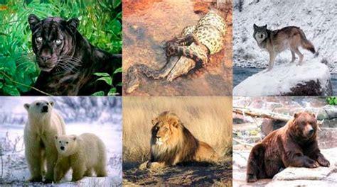 imagenes de animales herbivoros y carnivoros animalitos
