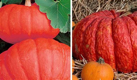 what color are pumpkins the many colors of pumpkins sensational color
