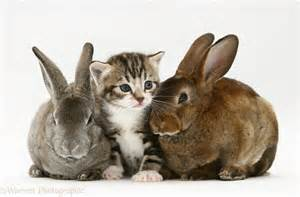 Pets: Tabby kitten and two rabbits photo - WP22504 Kittens