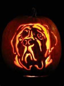 do pugs drool a lot 65 best images about mastiffs on a pug and mastiff dogs