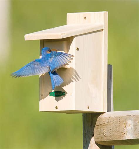 eastern bluebird house plans duncraft com duncraft wsb eastern bluebird house