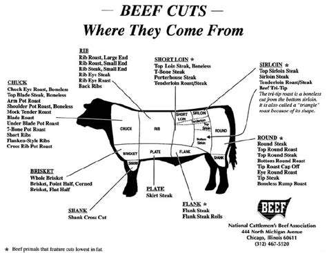 beef diagram beef cuts diagram beef get free image about wiring