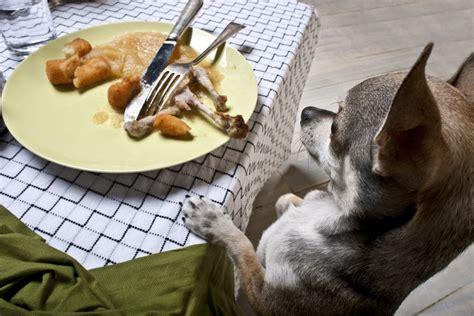 how do dogs last how do leftovers last wonderopolis