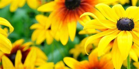 semi fiori perenni prelevare i semi delle perenni cose di casa