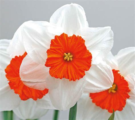 fiori gennaio in edicola dal 23 gennaio casa in fiore di febbraio cose