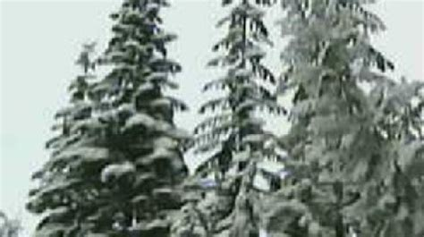 you cut christmas tree permits now available from u s