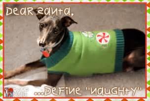 Funny christmas card photo ideas with dogs christmas card ideas for
