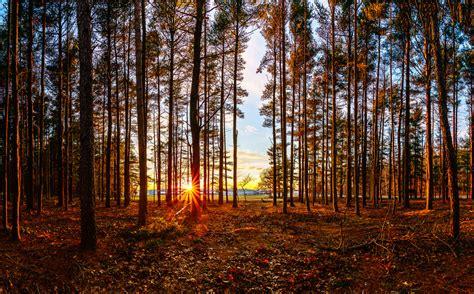 woods sunset wallpaper elevation of ny 25a shoreham ny usa maplogs