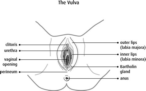 House Structure Parts Names by What Is Vulvar Cancer Canadian Cancer Society