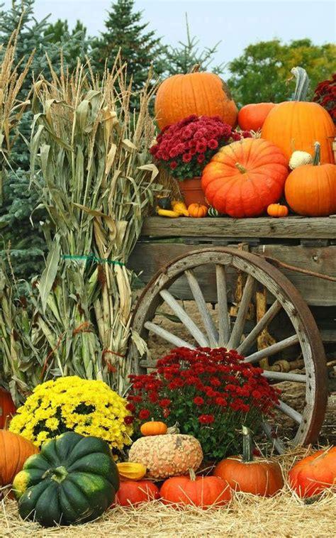 autumn garden harvest flowers pumpkins mums fall