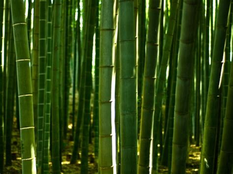 Pajangan Dinding Gadis Jepang Dari Bambuu tanaman bambu hias di indonesia bibitbunga