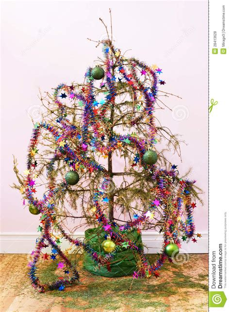 dead christmas tree royalty free stock photos image