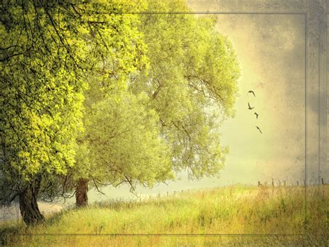 powerpoint template nature nature background 1466