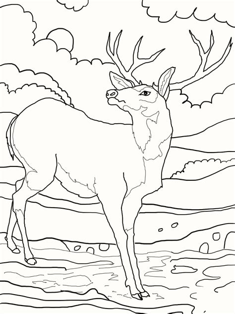 coloring book deer deer coloring pages 04