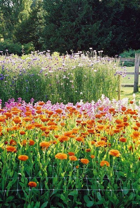 Eastton Gardens by Easton Walled Gardens