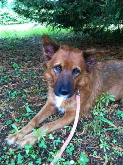 puppies columbus ga adoptable dogs for august 6 2013 politics