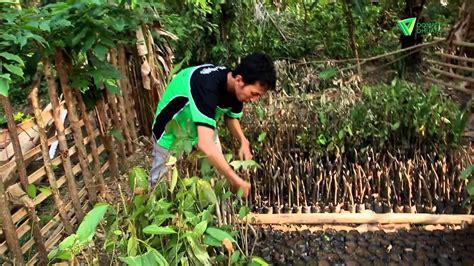 Madu Odeng Madu Hutan Ujung Kulon peternakan madu hutan ujung kulon dompet dhuafa 2016 11 05