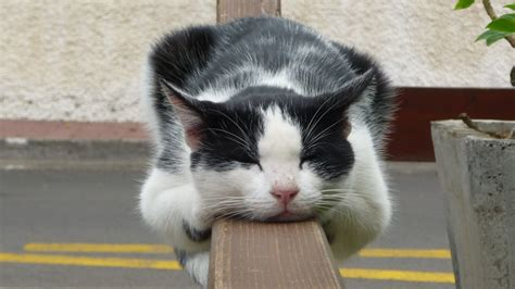 wallpaper lazy cat 22 funny lazy cats that make us laugh london beep