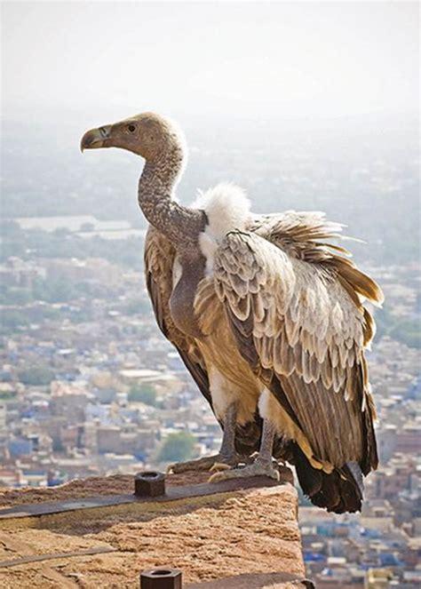 vulture the of an unloved bird books image joke