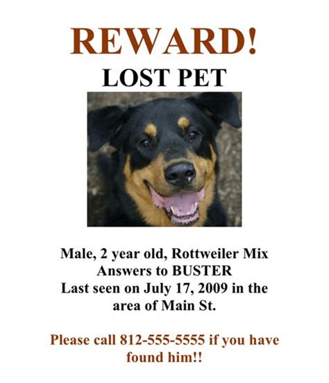 missing dogs if you lost your pet what would you do toluna