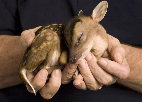 new year animal born 2010 no more than a handful the adorable newborn animals that