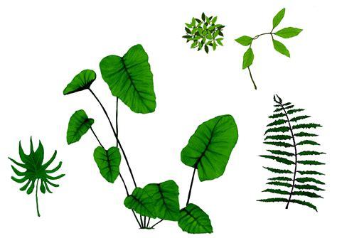 Dschungel Pflanzen by Jungle Plants