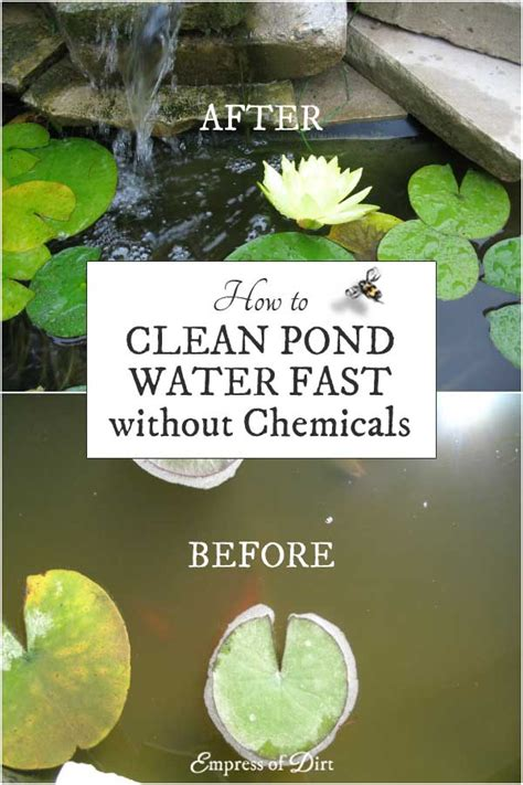 How To Clean Your System Of Fast Without Detox by How To Clean Gross Murky Pond Water Fast Without Chemicals