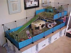Guinea Pig House Plans Ratteries On Ferrets Guinea Pigs And Guinea Pig Cages