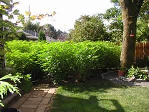Outdoor medical marijuana garden photos