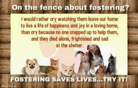fostering dogs pets n more 10 top reasons to foster an animal