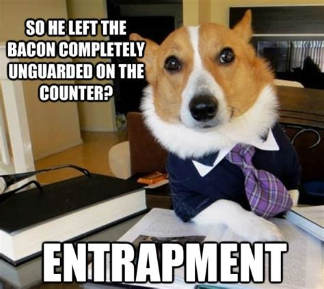 Dog Lawyer Meme - 25 funny dog memes part 2 dogtime
