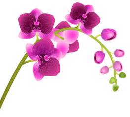 Beer Flowers - orchid flower transparent png clip art image gallery