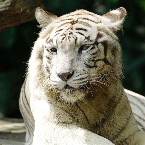 animals  zones singapore zoo wildlife reserves singapore