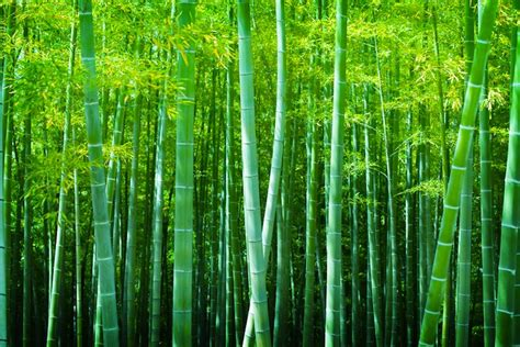 how success is like a chinese bamboo tree matt morris