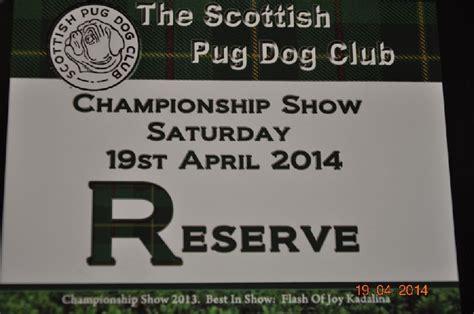 scottish pug club masserati lord of greyskull chien de race toutes races en tous departements