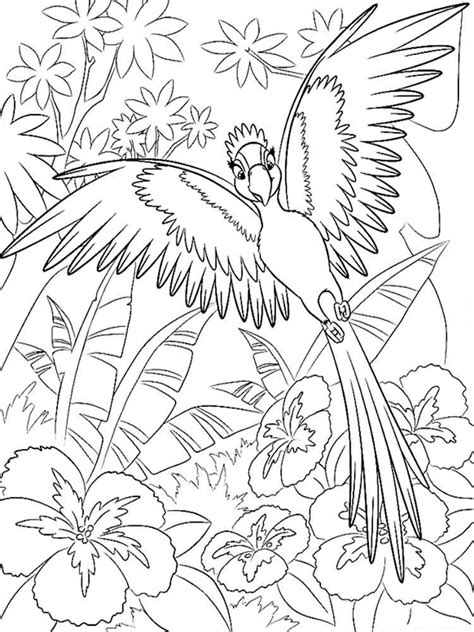 coloring book pages from pictures macaw coloring pages and print macaw coloring pages
