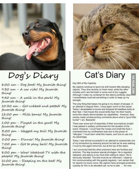 and cat diary cat and diary so true rupert