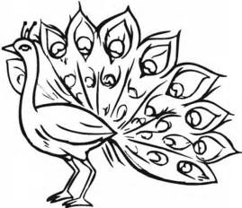 peacock coloring page free coloring pages of peacock for drawing