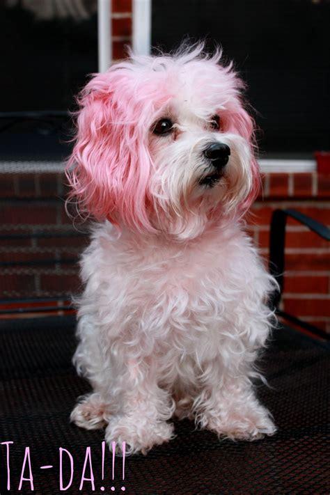 hair puppies puppy hair dye puppies puppy
