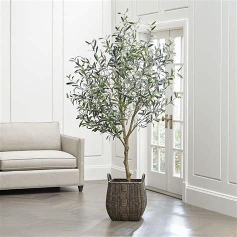 ulivi in vaso ulivo in vaso frutteto coltivazione ulivo in vaso