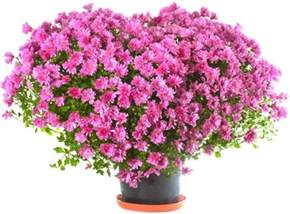 beautiful flowers image flower images free stock photos download 11 082 free