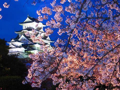 di jepang musim semi di jepang