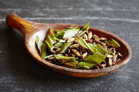 cuisiner des p穰es manger des insectes et les cuisiner nos recettes d insectes