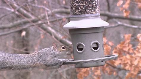 eliminator squirrel proof feeder video wild birds