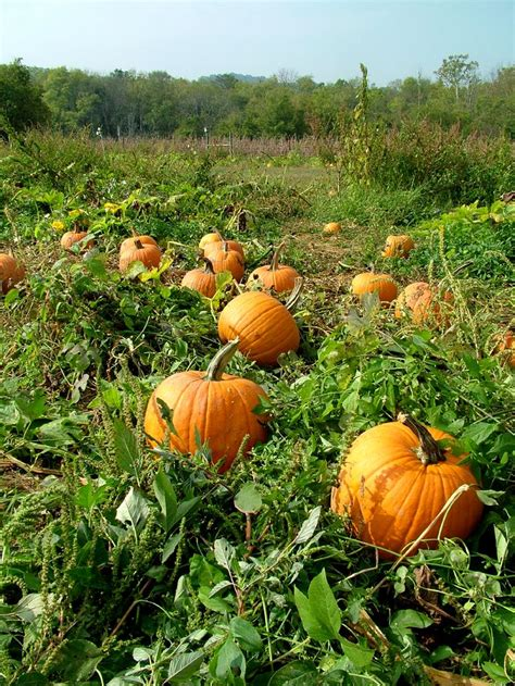 grow l for plants pumpkin plant